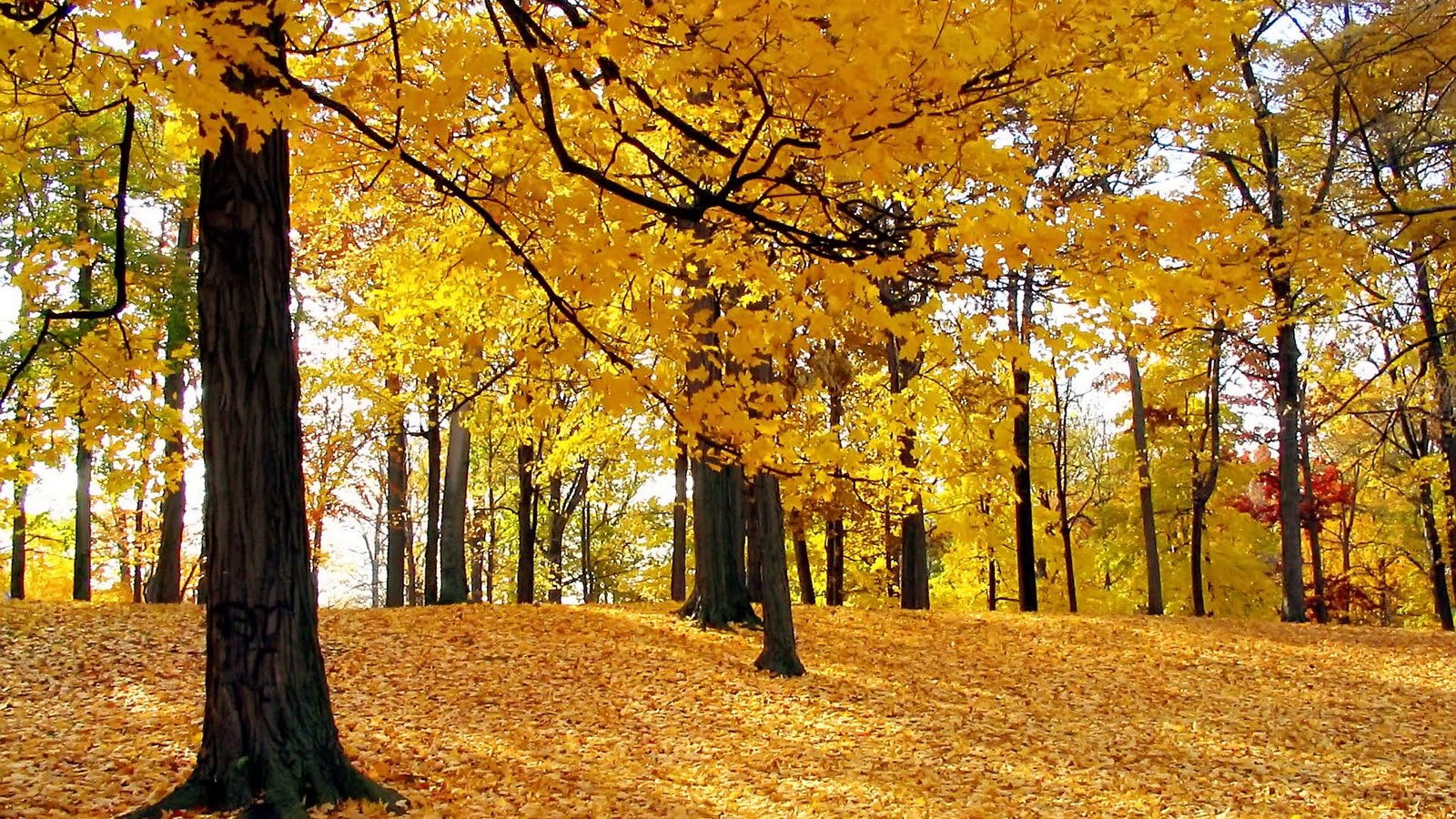 Life Style Desktop: Autumn Wallpapers HD