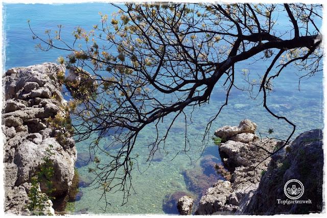 Gartenblog Topfgartenwelt Kroatien: Lungo Mare, blaues klares Meer