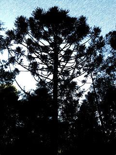 Parque das Sequoias, em Canela