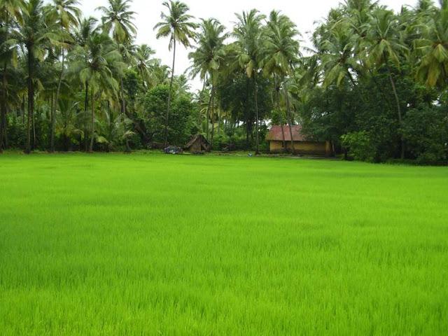 Kerala Village Wallpap...