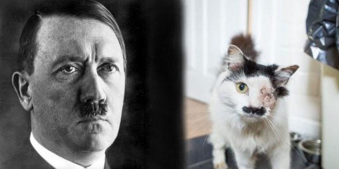 kucing-mirip-hitler