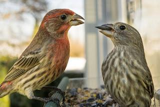 Saiba quais são as refeições ideais para o seu pássaro