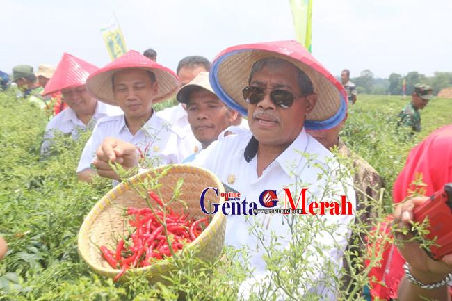 Tingkatkan Produksi  Cabai, Loekman Berjanji Beri Bantuan Sarana Pertanian Bagi Petani
