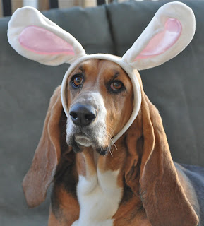 Pets dressed up for Easter