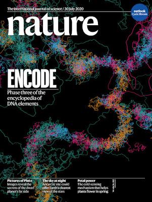 Junk DNA ENCODE