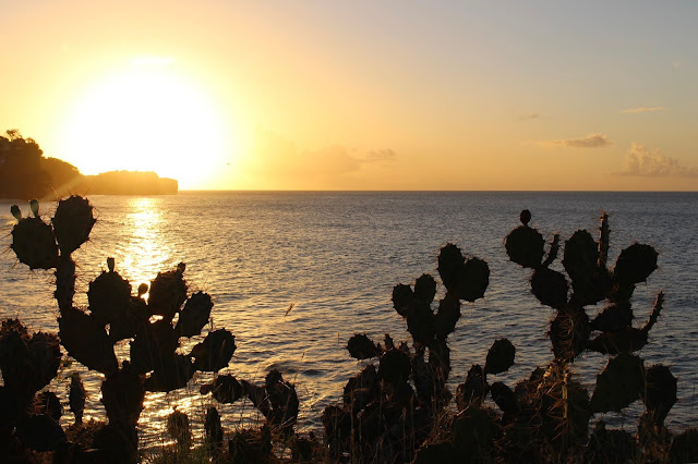 Cactus plants in the foreground with a sunset over the sea behind