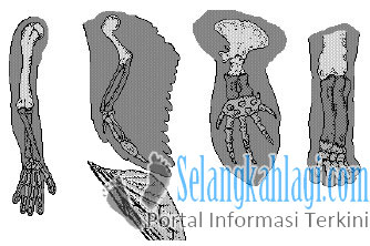 Homologi anggota tubuh depan berbagai macam vertebrata