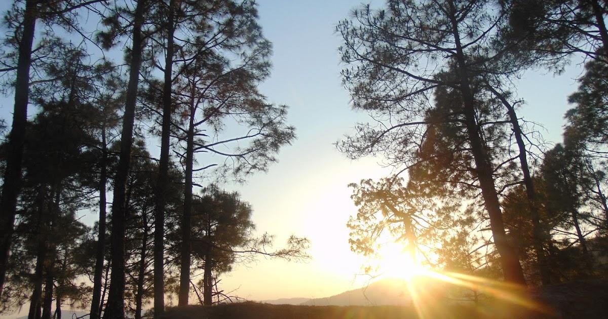 A Few Moments Of Sunset Near Binsar, Uttrakhand (Kumaon)