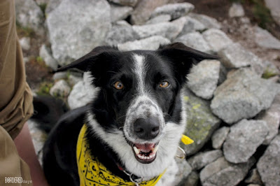 border collie with scarf sitting on rocks