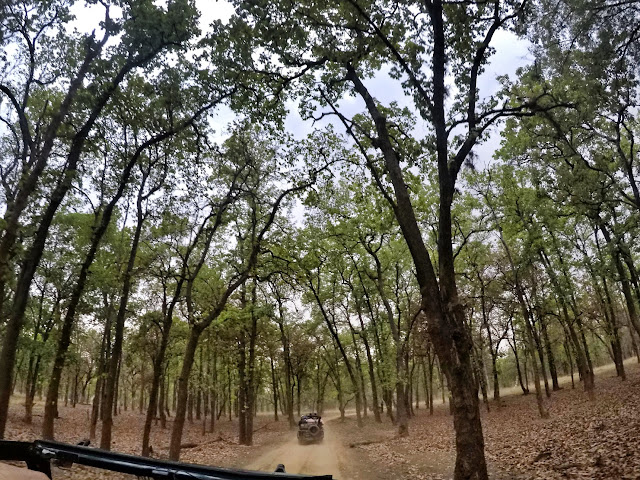 Thrilling ride in an open jeep through Bandhavgarh National Park