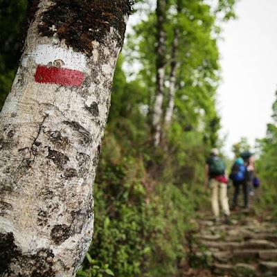 Árbol marcado en el trekking de Ghandruk