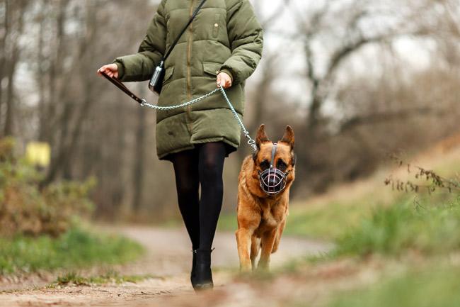 Co zrobić, gdy pies jest agresywny na spacerze?