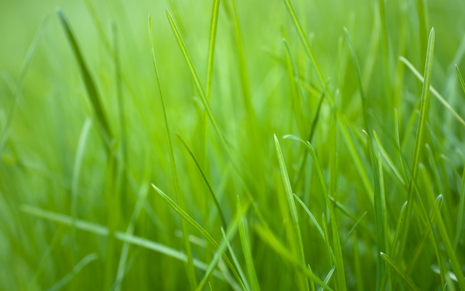 HD Wallpapers of Grass Art | Nice Pics Gallery