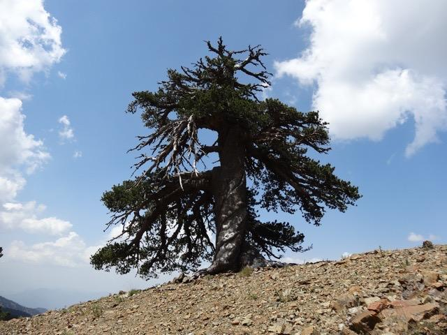 Europe's oldest known living inhabitant