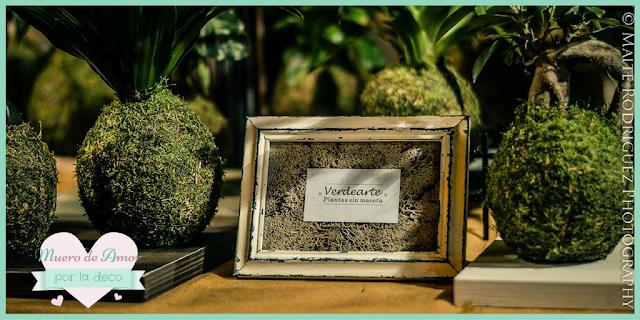 Plantas naturales sin maceta de VERDEARTE-By Ana Oval-11