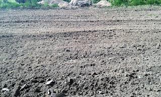 maruntirea, afanarea si amenajarea terenului pentru plantarea tomatelor