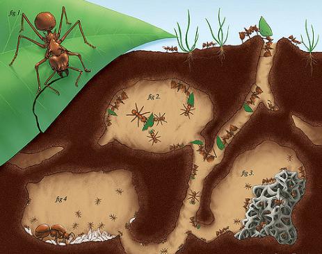 """Τα μυρμήγκια ήταν οι πρώτοι """"γεωργοί"""" πριν από 65 εκατομμύρια χρόνια"""