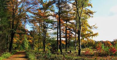 plaatjes zaterdag herfst