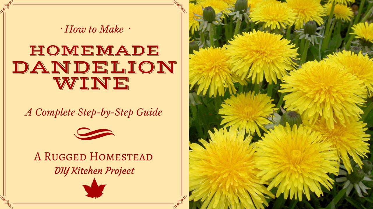 Wine from dandelions. Recipe for making homemade wine from dandelion flowers 14