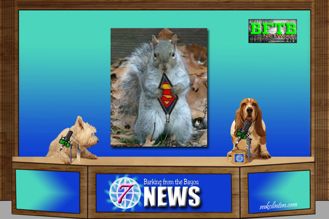 BFTB NETWoof News on hero guard squirrel