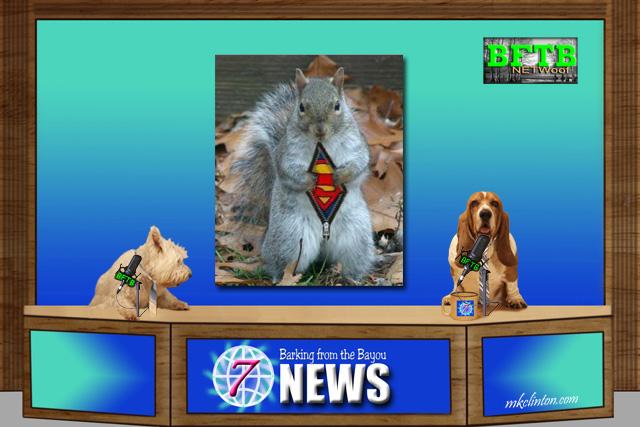 BFTB NETWoof News on hero guard squirrel