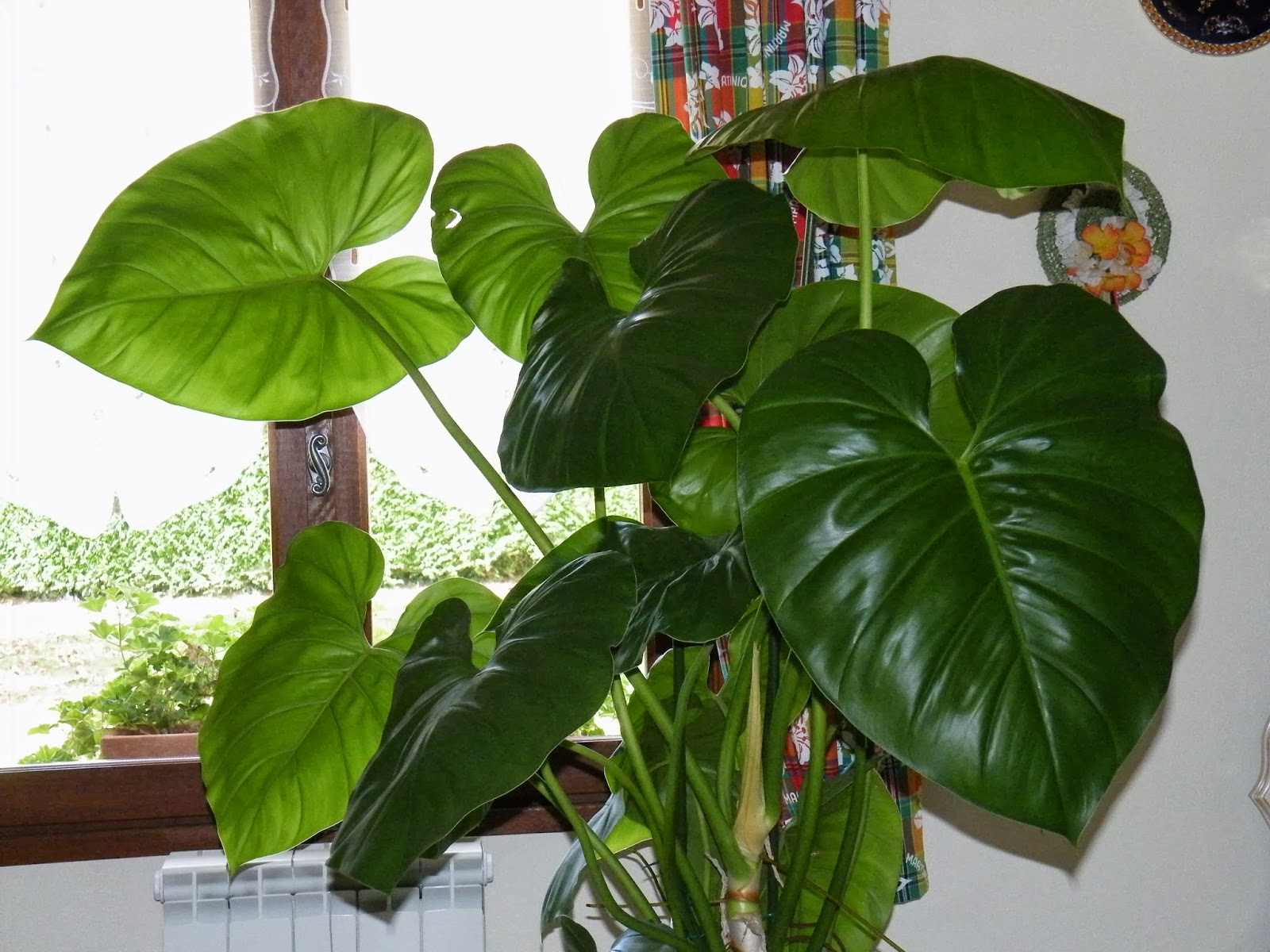 plante verte 9 feuilles