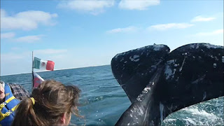 person slapped by whale tail