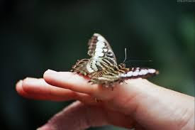 no tocar mariposas
