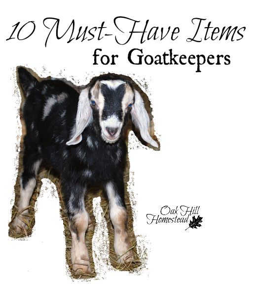 Ten must-have items for goatkeepers