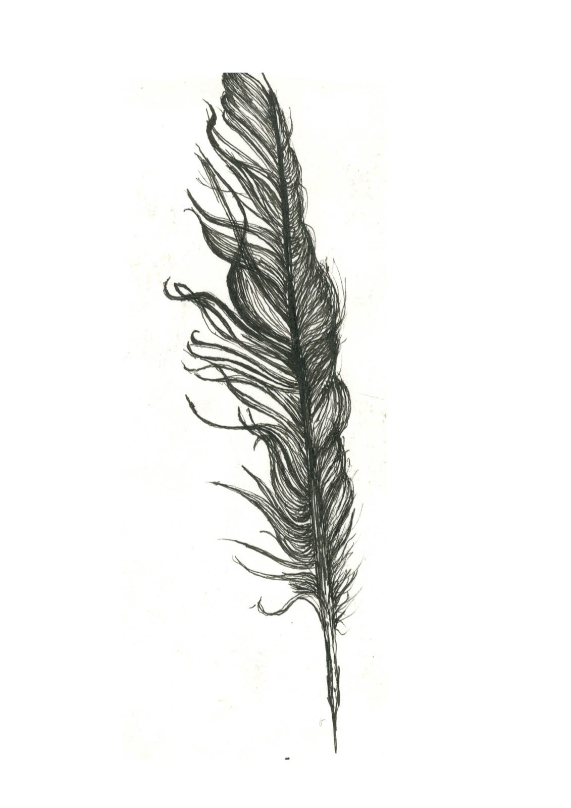 Cathal Ratcliffe Fine Liner And Pencil Drawing Of A Feather