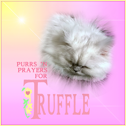 PURRS & PRAYERS FOR TRUFFLE