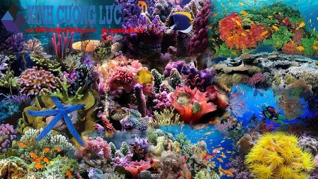 Tranh Kính Đại Dương Rực Rỡ Sắc Màu Thiên Nhiên