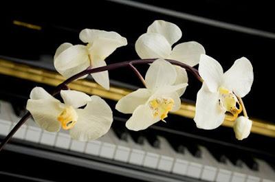 Những giai điệu đẹp của đàn piano làm say mê lòng người