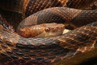 When Snakes Had Four Legs