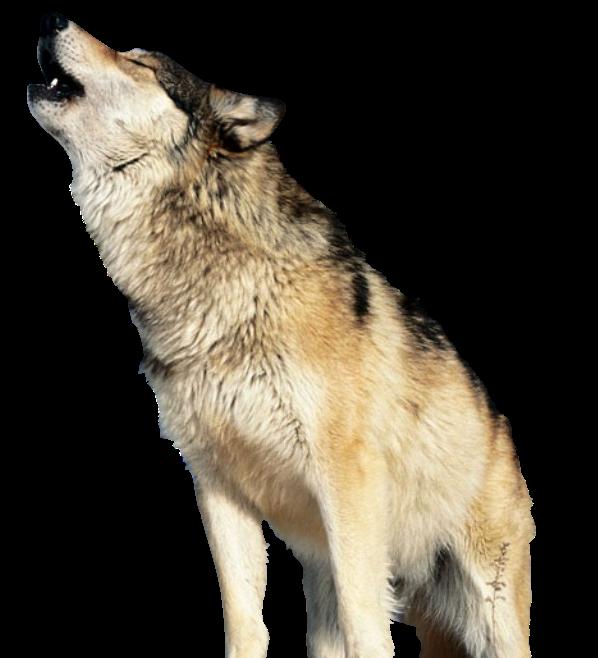 Render Lobo + Animales