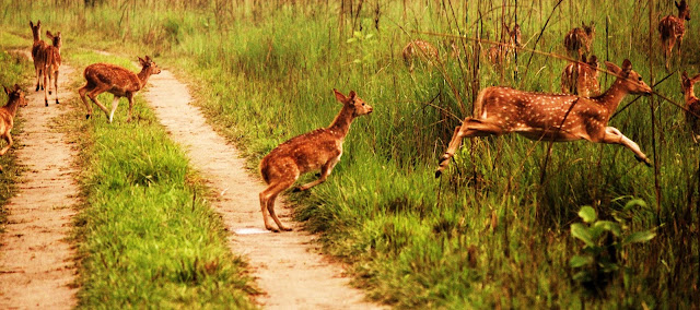 Jungle Tour in Bardia