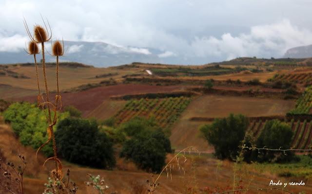 Viñedos por la Rioja Alta