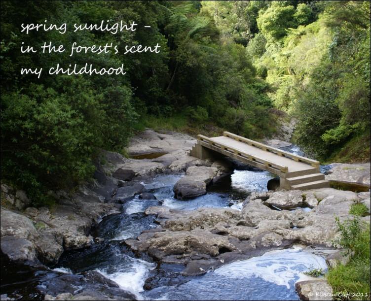swimming in lines of haiku spring sunlight haiga