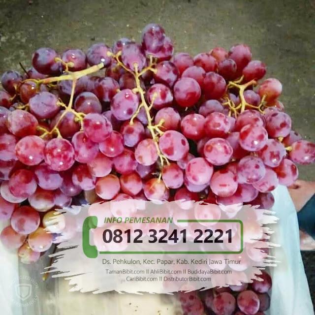 Jual Bibit Buah Anggur My Heart