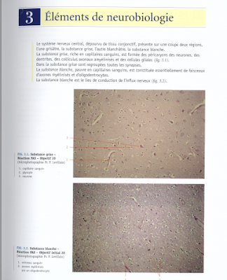 Télécharger Livre Gratuit Éléments de neurobiologie pdf