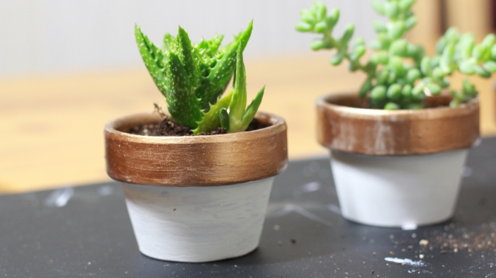DIY painted plant pot bronze succulent