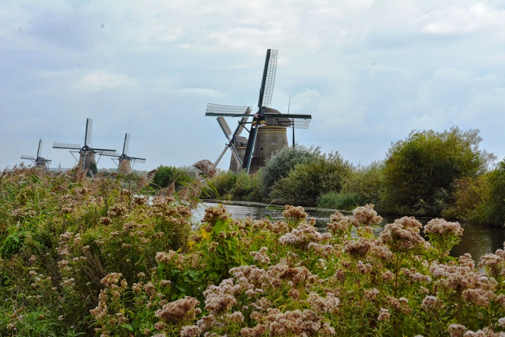 Kinderdijk flowers windmills