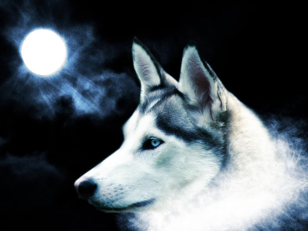 3D Wolf Wallpapers Free Download