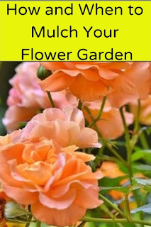 How and When to Mulch Your Flower Garden