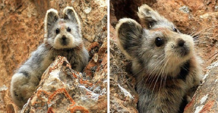 Rare Animal Dubbed As The 'Magic Rabbit' Spotted For The First Time In 20 Years