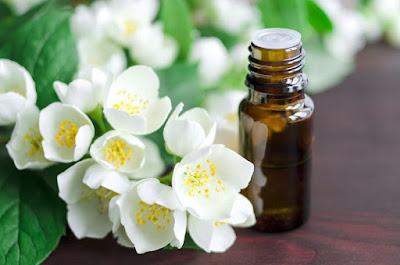 Tinh dầu hoa nhài - Không chỉ đơn giản là thuốc