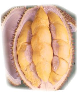 Pusat Budidaya Durian Menoreh Resmi:  Jual Bibit DURIAN MENOREH Varietas Unggul Nasional Gratis Ongkir Brosur dan KOnsultasi Budidaya, Call/ wa.: 0812-1560-7921