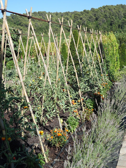 potager, prowansalski ogród warzywny