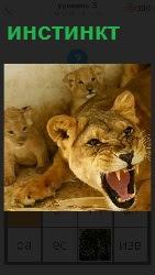 львица защищает своих детей открыв пасть и показывая зубы, срабатывает инстинкт