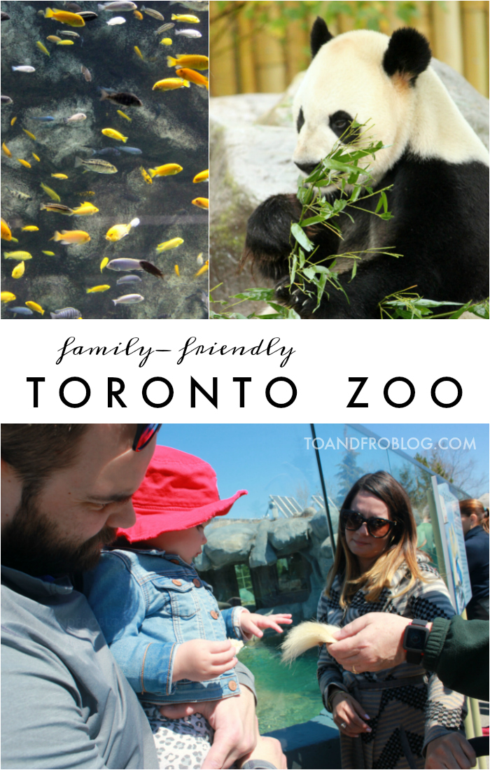 A Family Day at the Toronto Zoo
